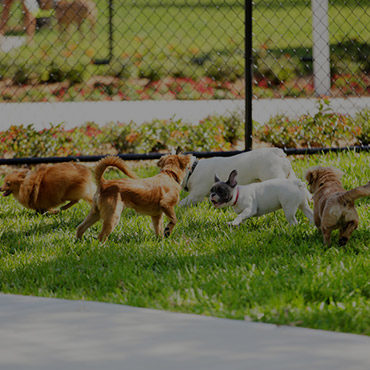 Large Dog Park at Greyhawk Townhomes Apartments